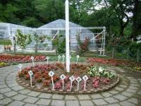 2019-06-23花巻温泉薔薇園283