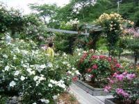 2019-06-23花巻温泉薔薇園288