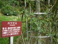 秋の花巻温泉街バラ園2019-09-28-125