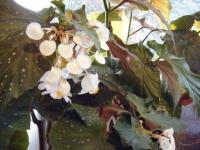 花と泉の公園2019-11-16-056