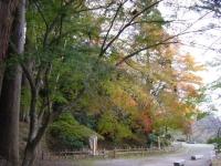 2019-11-09中尊寺菊祭り紅葉062