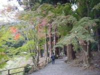 2019-11-09中尊寺菊祭り紅葉064