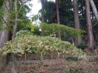 2019-11-09中尊寺菊祭り紅葉065