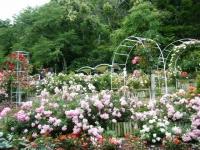 2019-06-23花巻温泉薔薇園291