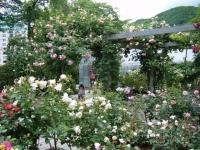 2019-06-23花巻温泉薔薇園296