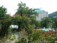 秋の花巻温泉街バラ園2019-09-28-133