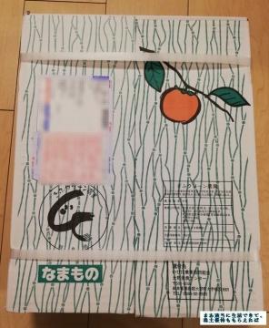 レシップHD 富有柿03 201909