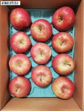 サンデー 葉とらずりんご01 201908