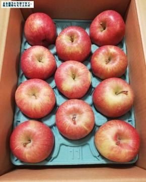 サンデー 葉とらずりんご02 201908