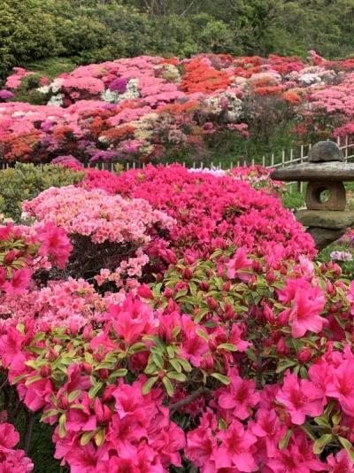 花の木公園2020 3