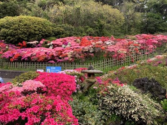 花の木公園2020 5