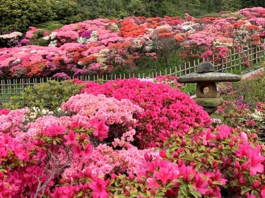 花の木公園2020 2