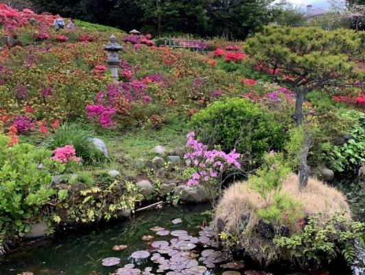 花の木公園2020 4