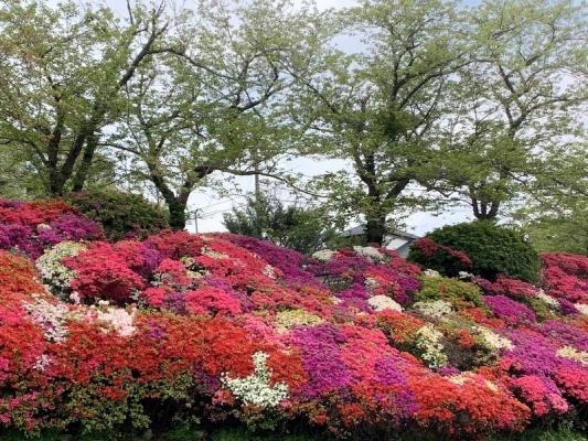 花の木公園2020 1