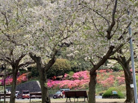 花の木公園2020 0