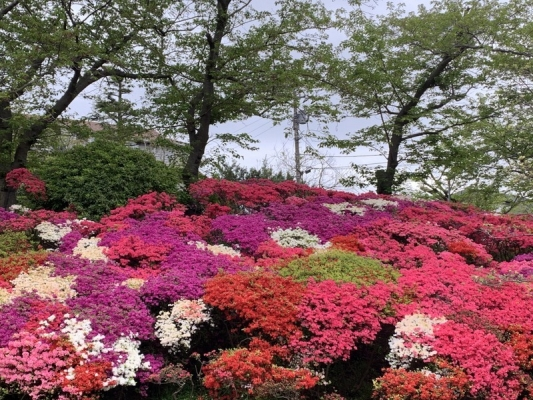 花の木公園2020 10
