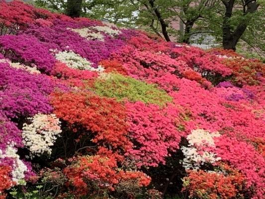 花の木公園2020 9