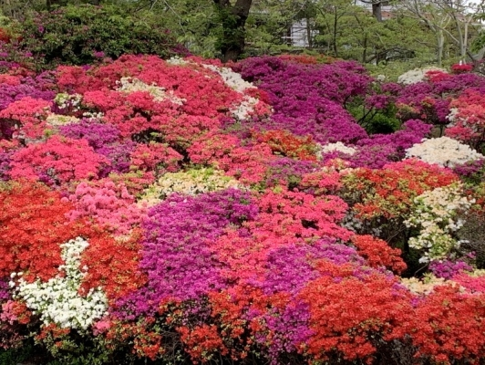 花の木公園2020 8