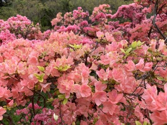 花の木公園2020 7
