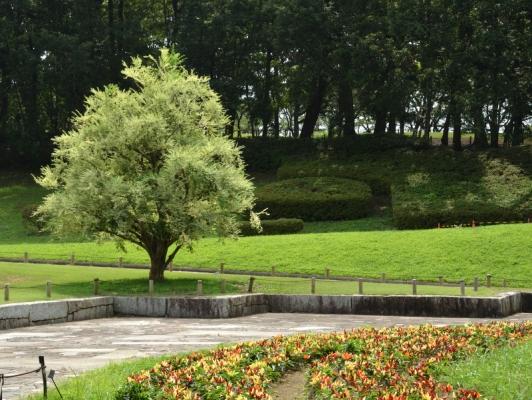 2020-8-10相模原公園 7