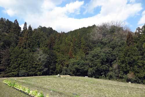200315風景4