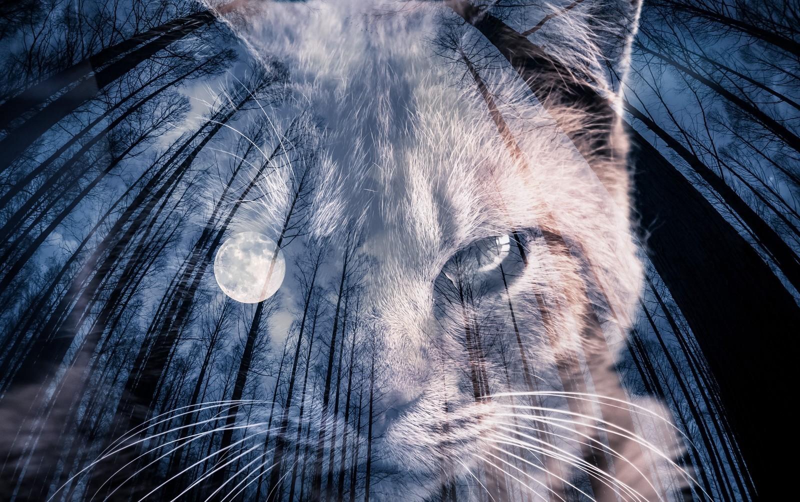 moonandcat_TP_V.jpg