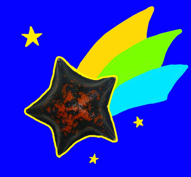 流れ星ヒトデ