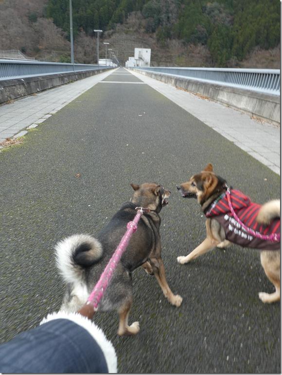 20191215ダム散歩京都02-05