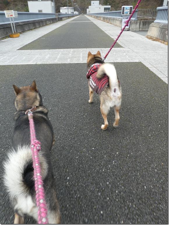 20191215ダム散歩京都02-10