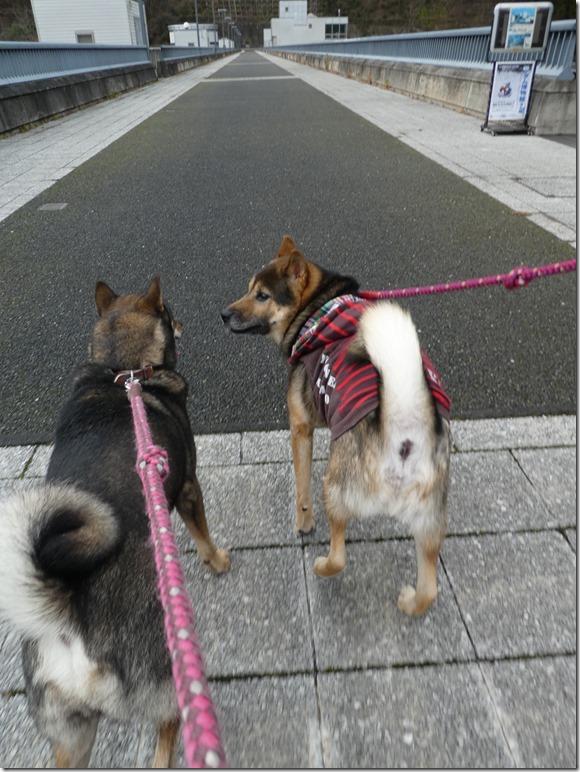 20191215ダム散歩京都02-11