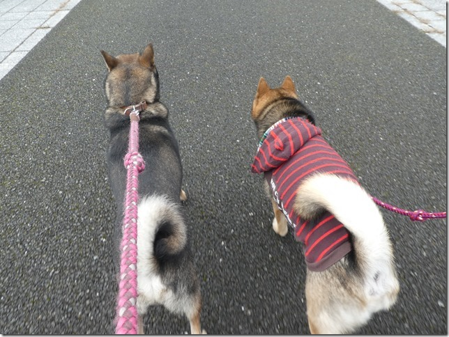 20191215ダム散歩京都02-14
