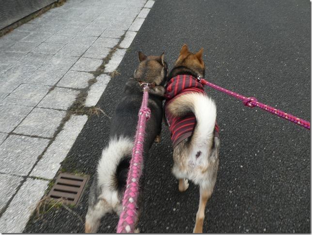 20191215ダム散歩京都02-15