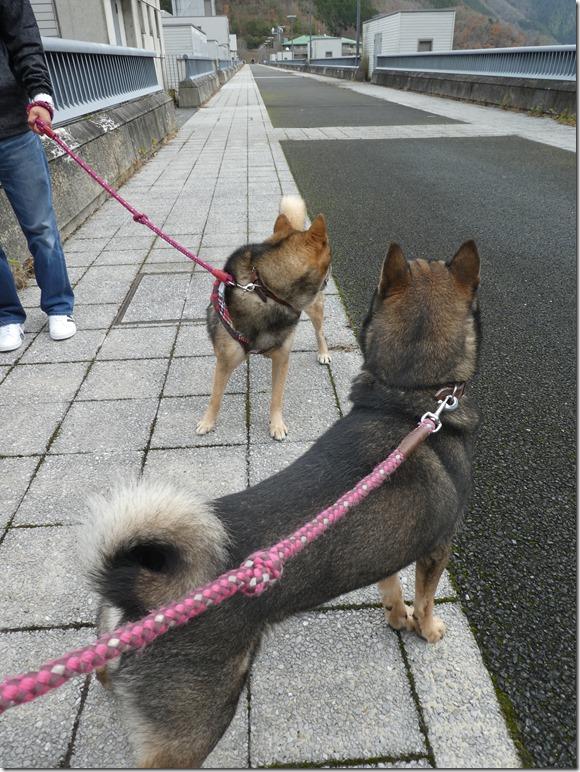20191215ダム散歩京都02-17