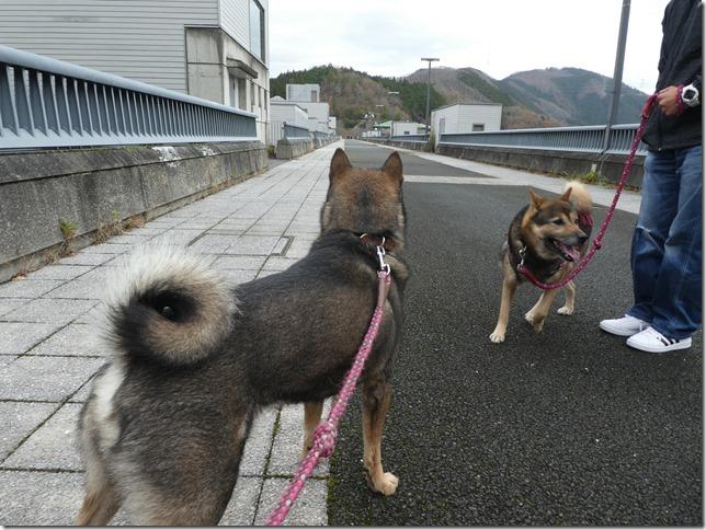 20191215ダム散歩京都02-19