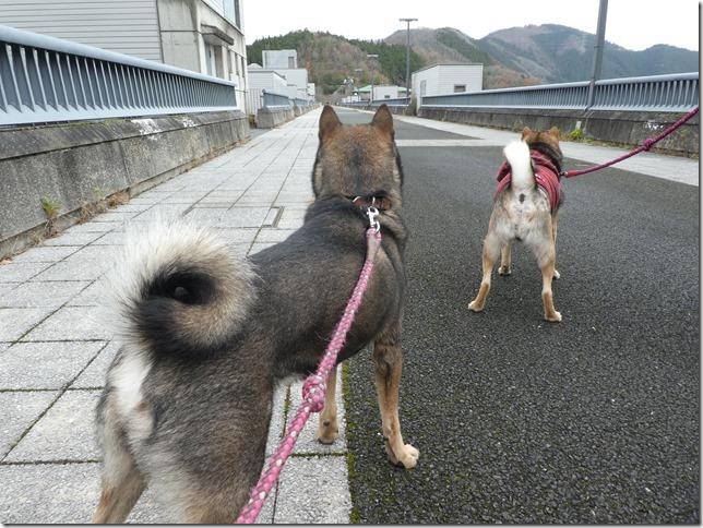 20191215ダム散歩京都02-20