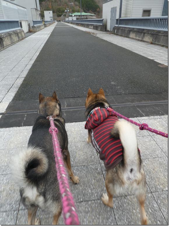 20191215ダム散歩京都02-34