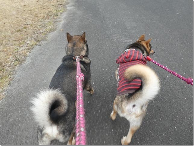 20191215ダム散歩京都05-14