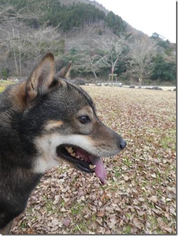 20191215ダム散歩京都05-19