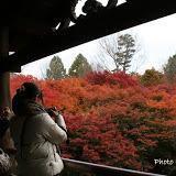 東福寺紅葉サム