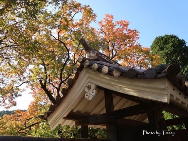 聖廟の門と楷の木