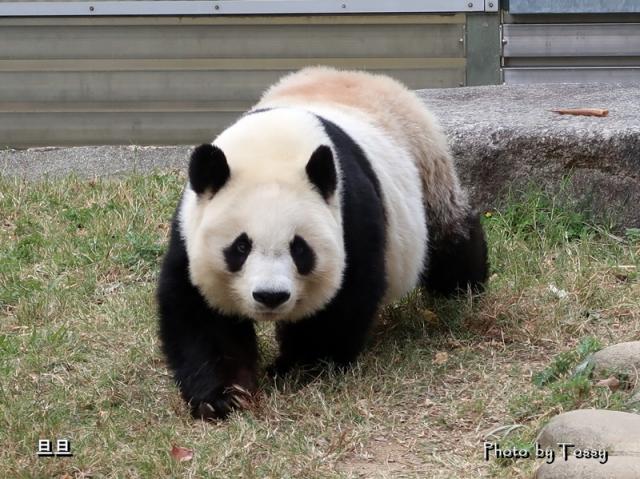 王子動物園 タンタン