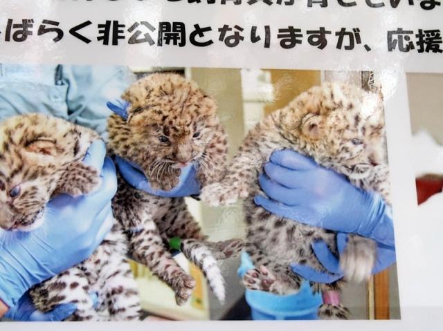 三つ子の赤ちゃんポスター
