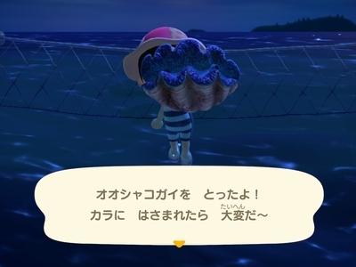 大シャコ貝