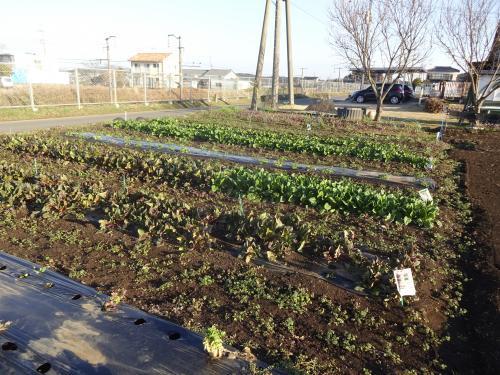 家庭菜園 こんな感じです!