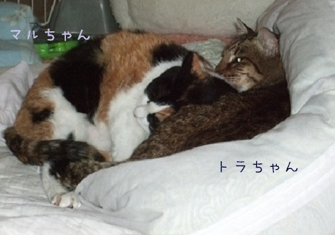 toratomaru30.jpg