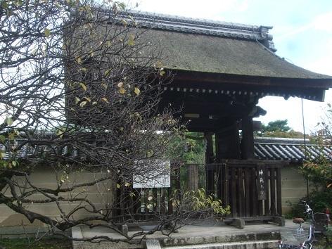 umenomiya102.jpg