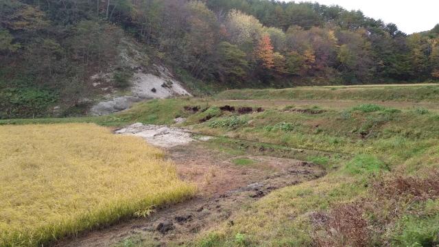 畦崩れと砂流入1104