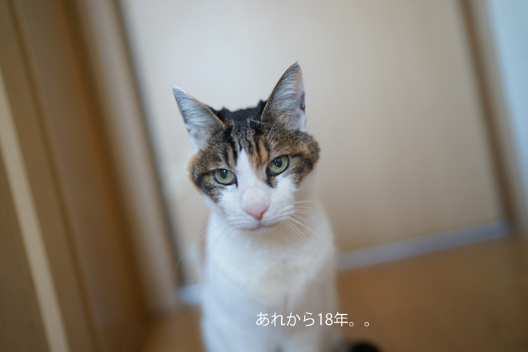 03-28_7374yui.jpg