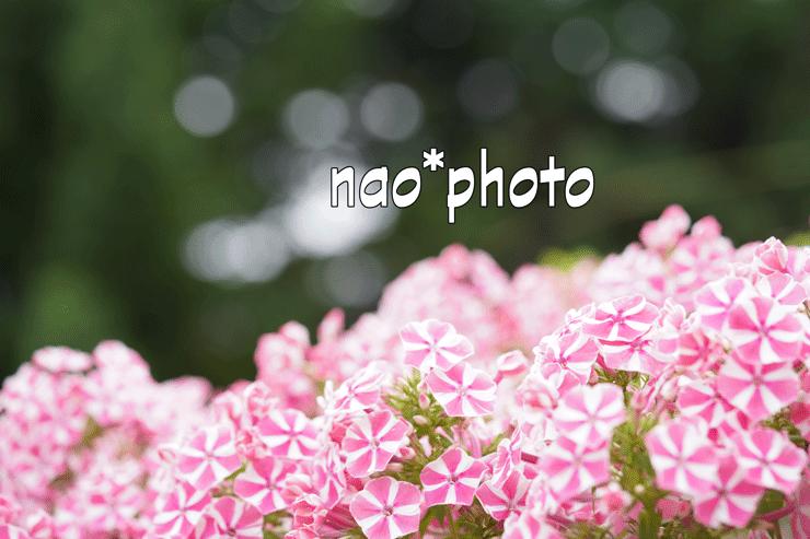 DSC02821.png