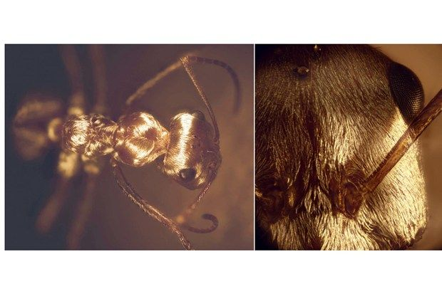 sahara-ants1.jpg